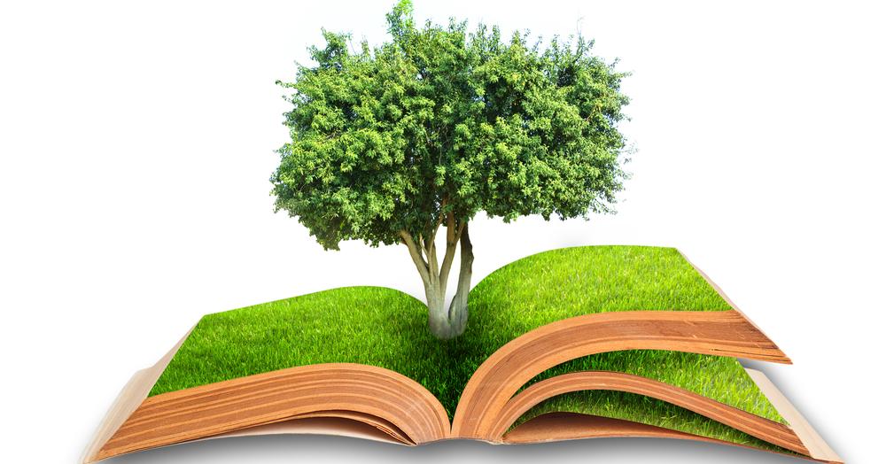 Заботясь об окружающей среде: Think Green, Think Sonora